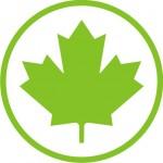 Zielony listek początkujący kierowca